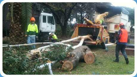 <p> <strong>WITH DRIVERS LICENCE</strong> </p> <p> Tree care industry, </p> <p> Must be keen...</p>
