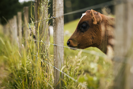 <p> Rural Fencing<br /> Stock Yards </p> <p> Weed Sprayingqc<br /> Crane...</p>