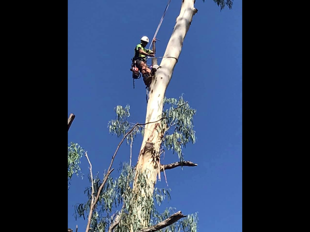 Fully Insured - Free Quotes Full Tree Removal - Large & Small Palm Cleanng & Removal Stum...