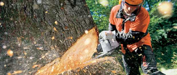 Tree King Tree Services have built a reputation of providing professional, quality tree services...