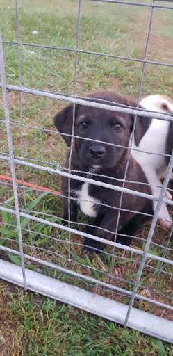 We have 3 female puppies ready now for their new homes 