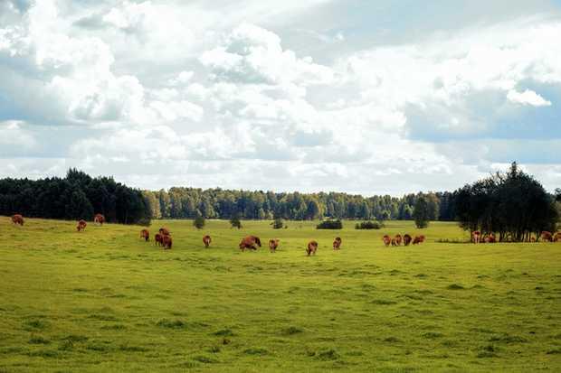 36 Angus Heifers 8 months old $352   14 Speckled Park Heifers $462   30 Angus Heifers 6...