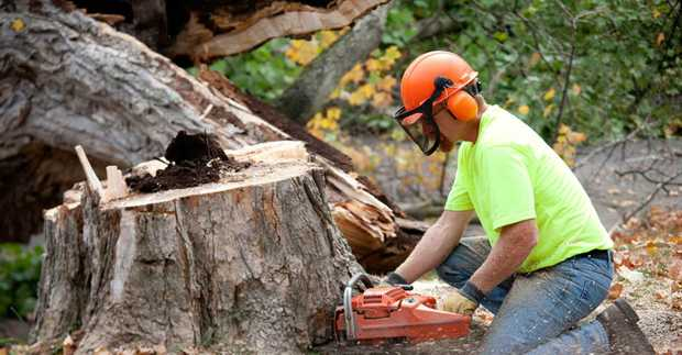 SMALL TREE REMOVAL     Small Tree Removal  Stump Grinding  Mulching...