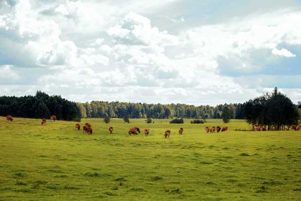 CATTLE MARKET REPORT: 18/03/19 Next Cattle Sale: 25/03/19   CATTLE - 8.30AM TICK CURFEW - 4PM...
