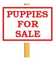 French Bulldog Pups   8wks old, 3M 1F (3 brindle 1 fawn), vacc, all m/c (956000010564240) , Reg...