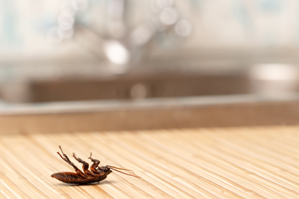 PestEd Trusted ... Bugs BUSTED   WINTER SUPER SAVER SPECIAL $129!!!!   Cocroaches, ants...