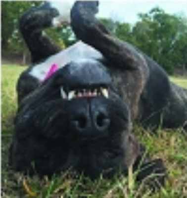 My Sniffer Dog is fitted with a GPS Tracking Collar MY RIFLE IS FITTED with Thermal Image...