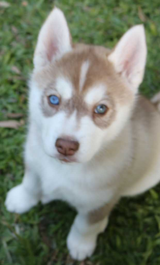 Browsing Pets | Sydney Classifieds | Daily Telegraph