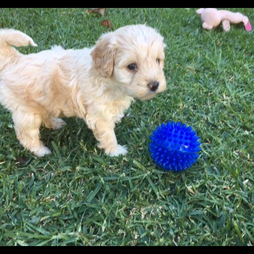 Browsing Pets | Geelong Classifieds | Geelong Advertiser