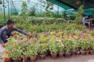 JONGS FLOWERS at Forreston, ( near Gumeracha ) South Australia-   a wholesale flower farm growing in...