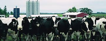 DAIRY FARM MANAGERContract Dairy Farm Management Position Available in West Gippsland An...