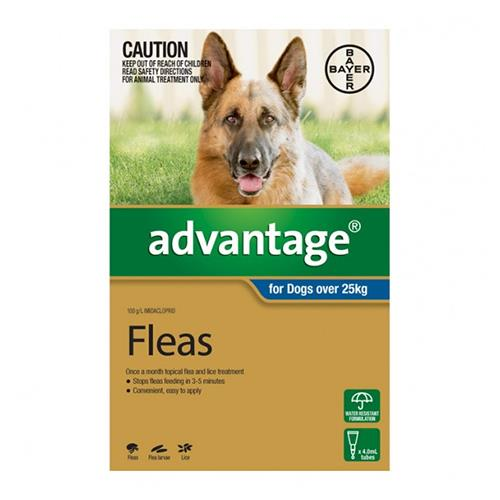 Advantage For Extra Large Dogs Over 25Kg (Blue) 6 Pack + 2 Pack Free