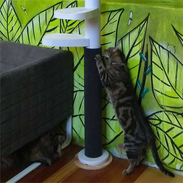 Monkee Tree Scratch Patch Wrap-Around Accessory for the Monkee Tree Cat Climber