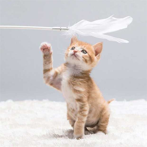 Pidan Cat Teaser Wand with Replaceable White Feathers