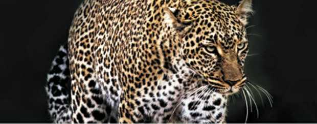 Learn about our exclusive escorted Africa 2020 Tour   WHEN:10am ON TUESDAY 27...