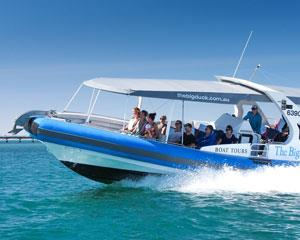 Experience spectacular scenery & sea birds, Seal Island, Wright Island & Waitpinga Cliffs. View Sea...