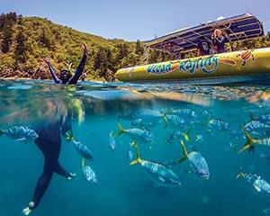 Visit a staple on the Australian bucket list and then some, with a full day adventure over and...