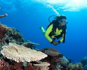 Experience the magic of The Great Barrier Reef with Cairns premier dive company.  Leave the crowds...