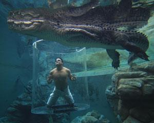 Swim with Crocodiles in the Cage of Death in Darwin! You will be underwater in an acrylic cage...