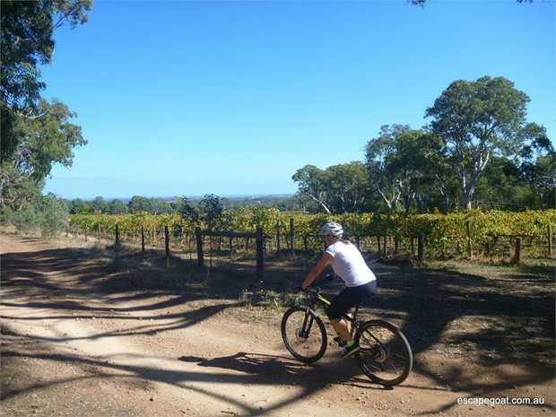 Embark on a unique wine cycle day tour via mountain bike and explore the rural charms of South...