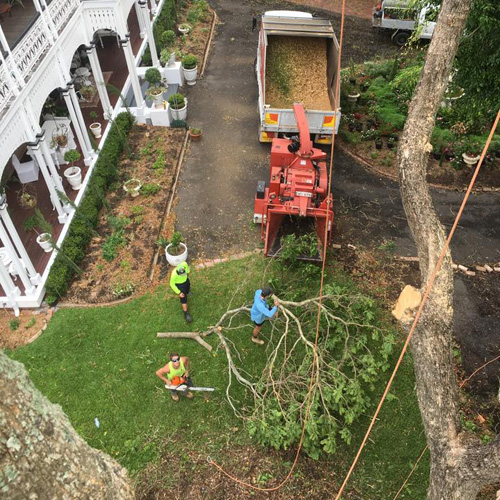 24 Hour Emergency Service   Fully Insured - Free Quotes    Full Tree Removal - Large & Small  Palm...