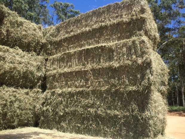 Valley Hay Supplies Hay For Sale    Sml sqs: Prime Lucerne, 2nd grade Lucerne, Grassy Lucerne, Barley...