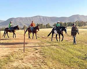 A unique way to see the scenic countryside of the Hunter Valley, this trail ride is the perfect outdoor...