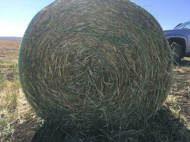 Barley Hay   Prime quality irrigated.   4x4 rd bales $220.   Sml sq $22 Inc...