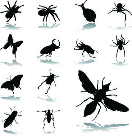 $198 ULTIMATE PEST CONTROL PACKAGE   Treating your most valuable asset for spiders, cockroaches...