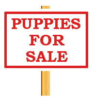 pup for sale from Champion Show parents. 9 weeks old, vacc. POA BRN:B65586 M/chip: 900164001839423...