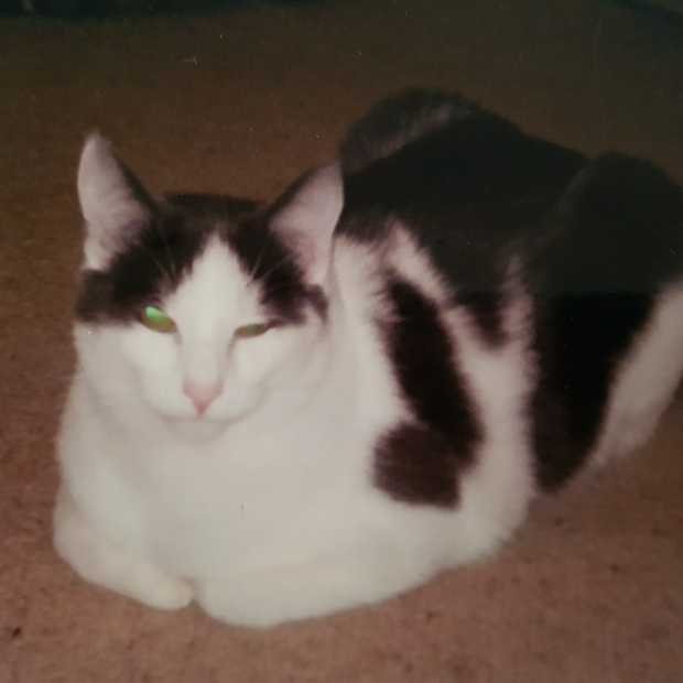 LOST CAT  