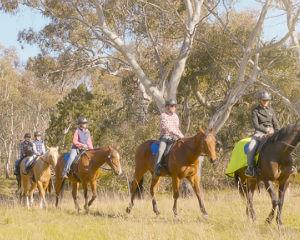Learn the basics of horse riding whilst exploring 820 hectares of untainted national park. Over 90...