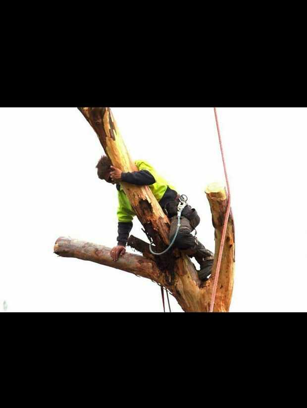 Chicco's Tree and Garden Services   • Tree surgery • Tree trimming • Tree...