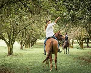 Jump on horseback for an educational tour around The Farm, Byron Bay and get a behind the scenes look...