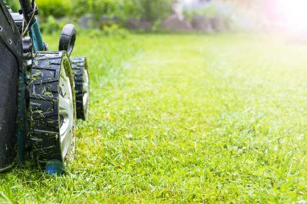 Reg lawn servicing.   yard tidys.   ride on work.   hedge & tree...