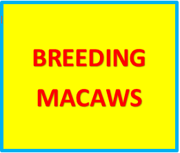BREEDING PAIRS OF MACAWS FOR SALE