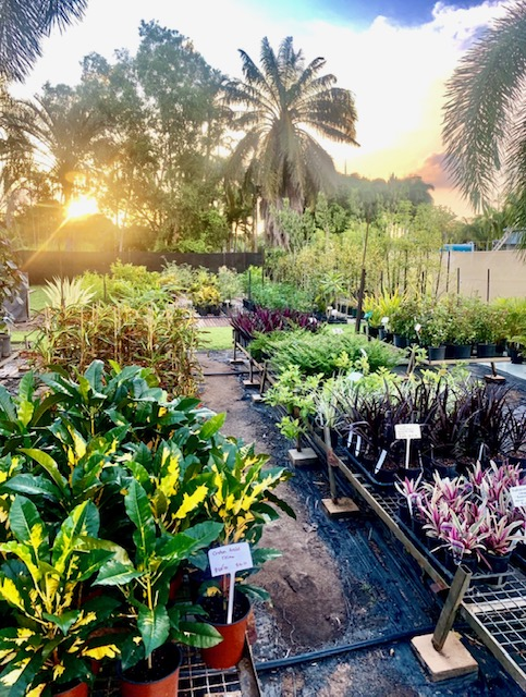 About Jeany's Nursery  We are one of the territory's oldest Nurseries (est. 1982) where...