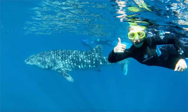 Dive into crystal clear waters as you swim alongside the whale sharks of Ningaloo Reef.