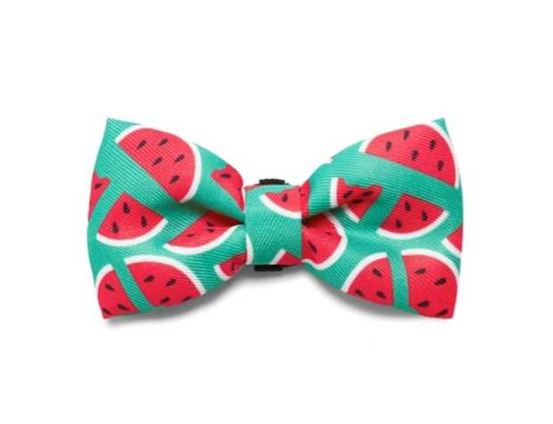 Zee Dog Bow Tie for Cats & Dogs - Lola Watermelon - Large