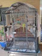 Large Parrott Cage