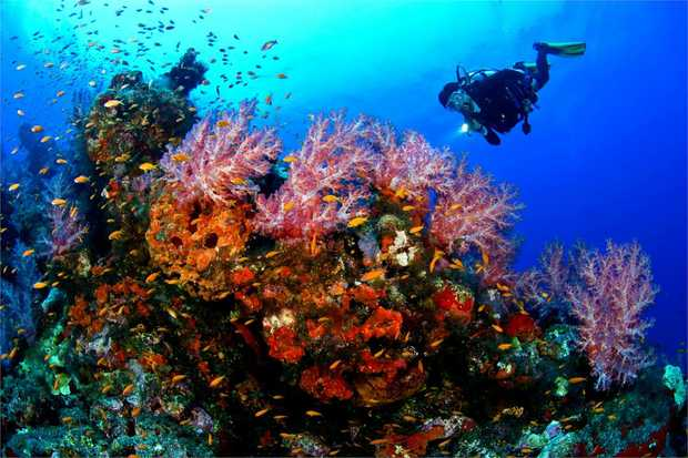 Learn to scuba dive in the serene waters of Wave Break Island. With no experience required and a fully...