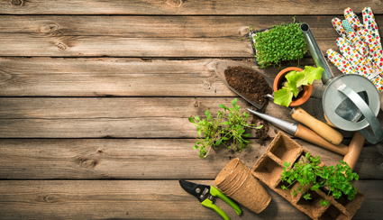Despina's Garden Maintenance   0402520613