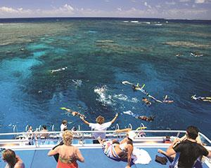 Admire the coral gardens and abundant fish life. Unwind while you snorkel the pristine warm waters off...