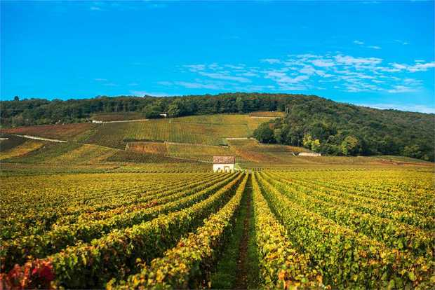 This 4 day bike tour is a short sojourn to experience the wines of Cote de Nuits and Cote de Beaune...