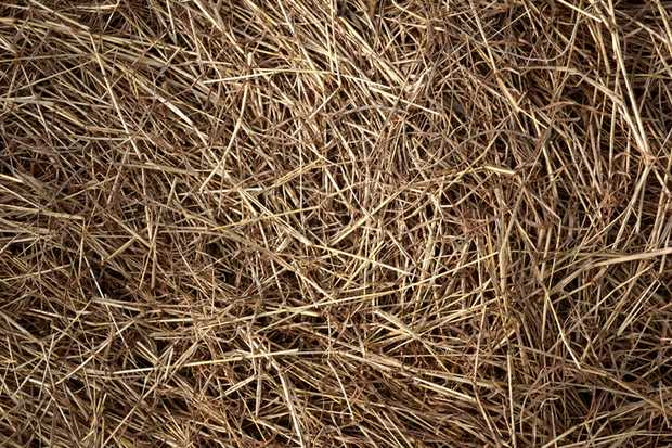 Oaten or Lucerne Hay & Barley Straw
