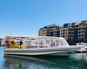 Cruise the sparkling seas of Glenelg and watch wild dolphins frolic about in their natural playground...