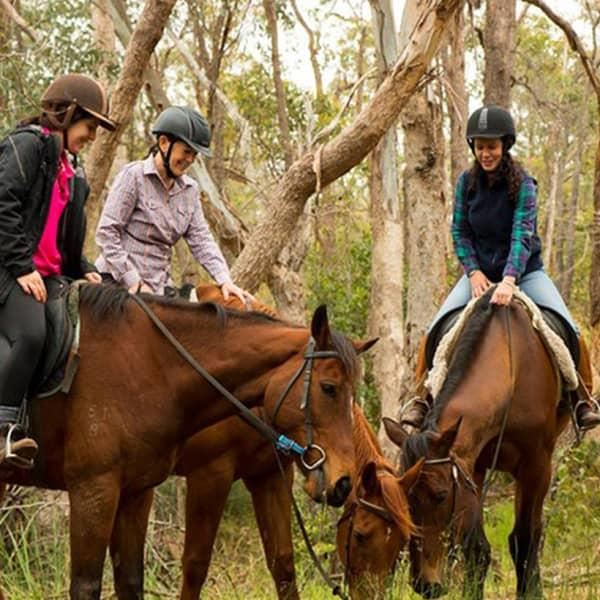 Make walking a thing of the past with Green Gables Stables and their horse trail riding adventure. Take...