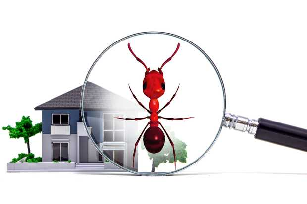 Your Pest and Termite Specialist  