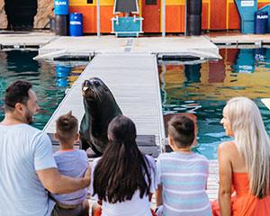 Play, pat and feed some of Sea World's adorable seals during an exclusive behind the scenes encounter.
