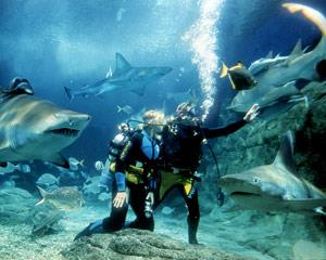 You too can gear up in full SCUBA style and experience the thrill of swimming amongst these amazing...